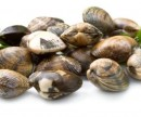 CLAM 50/70 VIETNAM 20X500 BROWN = 10KG